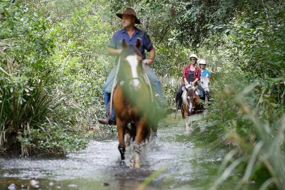 rainforest-valley-horse-riding-experience-nsw-australia-bellrowan